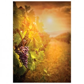 Vineyard Perforated Bookmarks