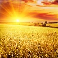 Fields of Grain Singles