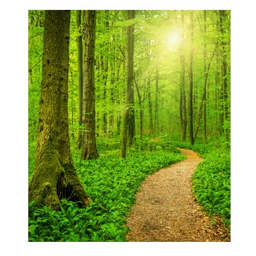 Sunny Forest Path - Singles